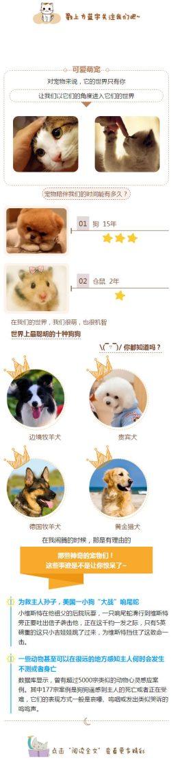 宠物店宠物介绍 可爱宠物商店模板微信订阅号公众号文章模板