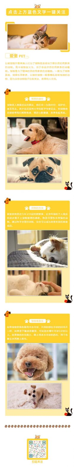 宠物PET微信公众号推文模板小猫小狗推送素材图标
