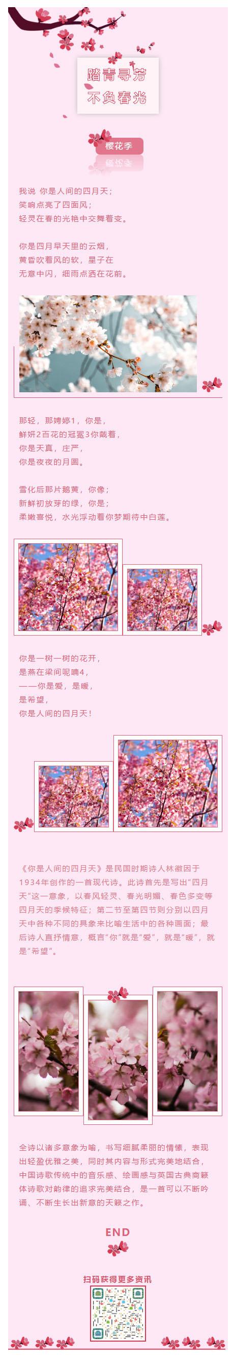 樱花粉红色背景微信公众号推送图文模板推文素材微信文章模板