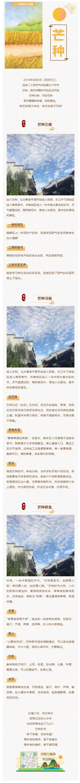 二十四节气芒种中国传统节日微信公众号图文模板推送图文素材