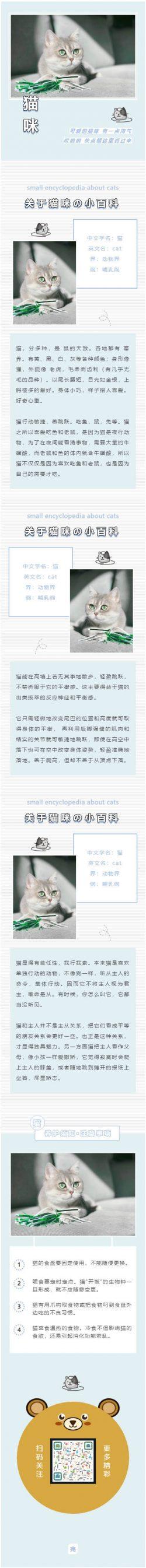 宠物模板微信公众号模板灰色条纹背景图猫咪素材
